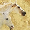 Golden Steeds by Melinda Hughes-Berland
