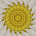 Golden Sun by Bobbie Barth