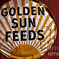 Golden Sun Feeds by Tikvah's Hope