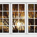 Golden Sun Silhouetted Tree Branches White Window View by James BO Insogna