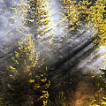 Golden Sunbeams by Evgeni Dinev