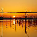 Golden Sunrise IIi by Roger Becker