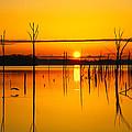 Golden Sunrise Iv by Roger Becker