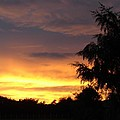 Golden Sunset 3 by Carol Lynch