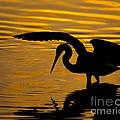 Golden Sunset by Ben Dickmann