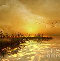 Golden Sunset by Carlotta Ceawlin