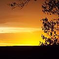Golden Sunset by Cheryl King