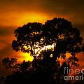 Golden Sunset... by Nina Stavlund