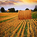 Golden Sunset Over Farm Field In Ontario by Elena Elisseeva