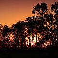 Golden Sunset by Rebecca Davis