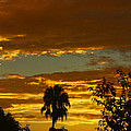 Golden Sunset by Tommy Anderson