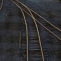 Golden Tracks by Margie Hurwich