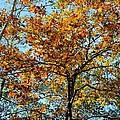 Golden Tree Lined Sky by Maria Urso