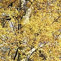 Golden Tree by Patrick Kessler