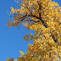 Golden Tree by Susan Porter