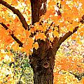 Golden Tree by Tammy Hileman