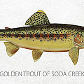 Golden Trout Of Soda Creek by Aged Pixel