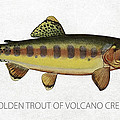 Golden Trout Of Volcano Creek by Aged Pixel