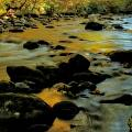 Golden View Of The Little River In Autumn by Dan Sproul