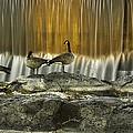 Golden Waterfalls by Scott Moss