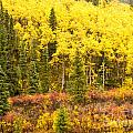 Golden Yellow Fall Boreal Forest In Yukon Canada by Stephan Pietzko