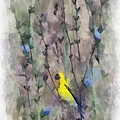 Goldfinch In Wildflowers by Kerri Farley