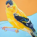 Goldfinch by Jamie Downs