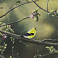 Goldfinch by Mary Ann King