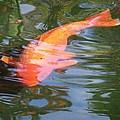 Goldfish by Cornelia  DeDona