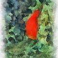 Goldfish Photo Art 04 by Thomas Woolworth