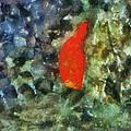 Goldfish Photo Art 05 by Thomas Woolworth