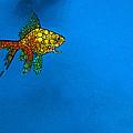 Goldfish Study 4 - Stone Rock'd Art By Sharon Cummings by Sharon Cummings