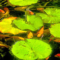 On Goldfish Pond Artwork by David Lee Thompson