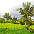Golf Course Under Cloudy Skies by John Orsbun