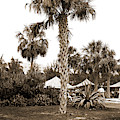 Golf Links, Hotel Royal Poinciana, Palm Beach, Fla, Hotels by Litz Collection
