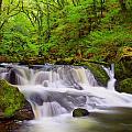 Golitha Falls And River Fowey by Darren Galpin