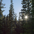 Good Afternoon Sunshine by Debra Powell