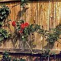 Good Fences by Edward Shmunes