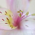 Good Fortune In Pastel by Irina Wardas
