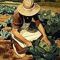 Good Harvest by Glenn Beasley