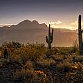 Good Morning Arizona by Saija  Lehtonen