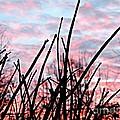 Good Morning Sunrise by Angela Weis