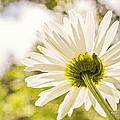 Good Morning Sunshine by Angela Stanton