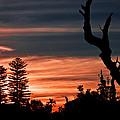 Good Night Trees by Miroslava Jurcik