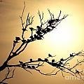 Good Nite Birds by Ben Yassa