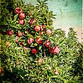 Vintage Apple Orchard by Roxy Hurtubise
