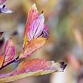 Goodbye To Autumn by Dana Moyer
