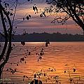 Goodnight Lake by Cindy Greenstein