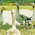 Goose Chat by Artist and Photographer Laura Wrede