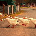 Goose Crossing by Michael Pickett